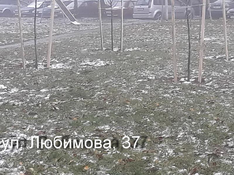 любимова 37